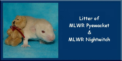 Litter of Pye and Night
