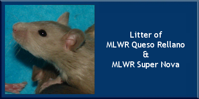 Litter of MLWR Queso Rellano and MLWR Super Nova
